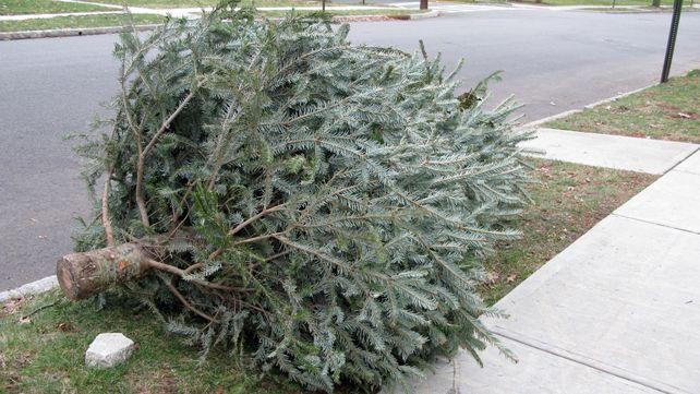SolarCity's Holiday Grinching
