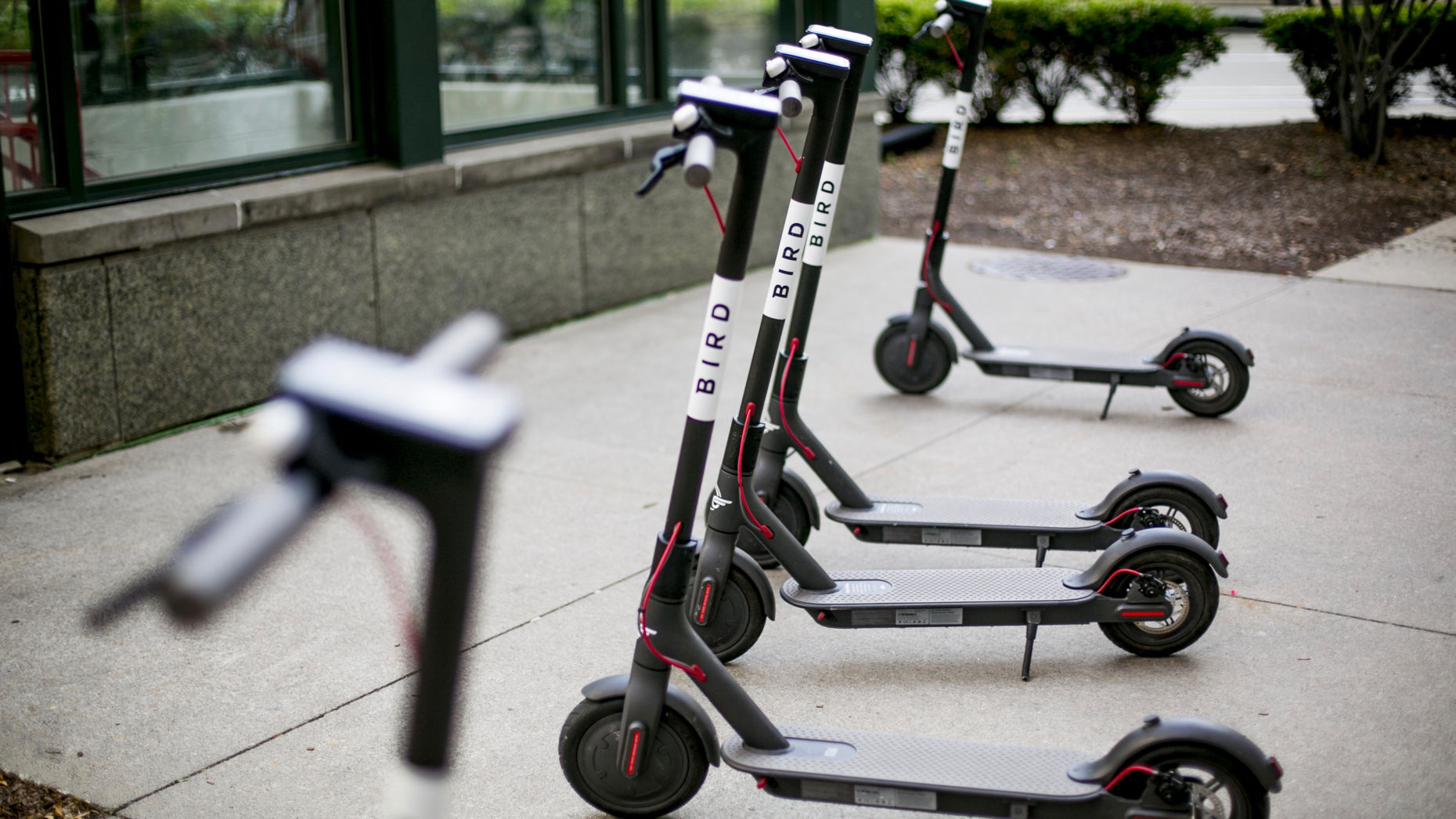 A collection of Bird electric scooters in Detroit. Photo by Bloomberg
